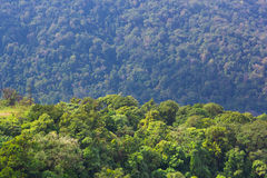 Forest high angle view Stock Image