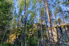 Forest with high cliffs Stock Image