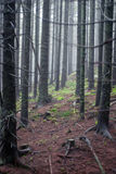 Forest. High trees in the fog Royalty Free Stock Photos
