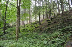 Forest in the Highlands of Scotland Stock Photography