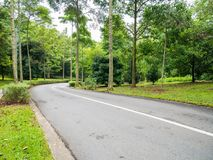 Forest Road to the Forest Hill. Forest Highways or Forest Routes are a category of roads within Forests Stock Photos