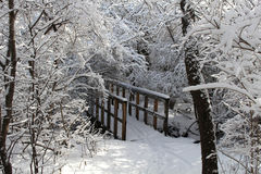 Forest Hiking Bridge New Snowfall Foto de archivo