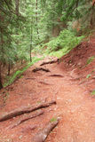 Forest hiking path Stock Image