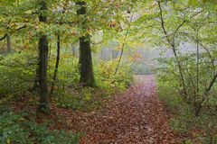 Forest hiking path. Hiking path at rainy day with fog coming up royalty free stock photo