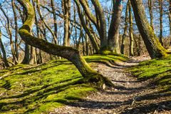 Forest, Hiking, Trail, Away, Path Stock Images