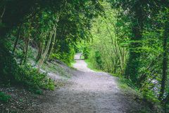 Winding Forest Hiking Trail Green Foliage. Winding Way. Forest Hiking Trail through Green Foliage. Surrounded by Flora and Trees royalty free stock image