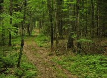 Forest hiking trail in light rain Royalty Free Stock Photo