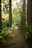 Hiking trail on the Oregon Coast royalty free stock images