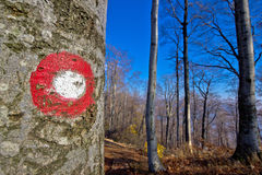 Forest hiking trail path marking Royalty Free Stock Image