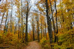 Forest trail in Pictured Rocks National Lakeshore, Munising, MI. Forest hiking trail in Pictured Rocks National Lakeshore Royalty Free Stock Photography