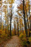Forest trail in Pictured Rocks National Lakeshore, Munising, MI. Forest hiking trail in Pictured Rocks National Lakeshore Stock Image