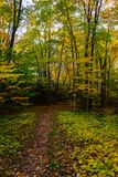 Forest trail in Pictured Rocks National Lakeshore, Munising, MI. Forest hiking trail in Pictured Rocks National Lakeshore Royalty Free Stock Images