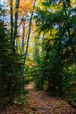 Forest trail in Pictured Rocks National Lakeshore, Munising, MI. Forest hiking trail in Pictured Rocks National Lakeshore, Munising, MI, USA. Autumn forest with stock photography