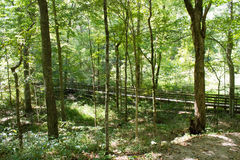 Forest hiking trail Stock Photos