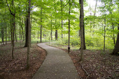 Forest hiking trail Royalty Free Stock Photography