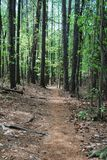 Forest hiking trail through trees with nobody Royalty Free Stock Photo