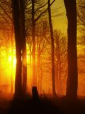 Forest on hill increased from early morning autumn foggy background. Royalty Free Stock Photos