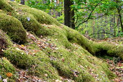 Forest hill, overgrown with moss. Small hill in the autumn forest overgrown with thick green moss Royalty Free Stock Photography