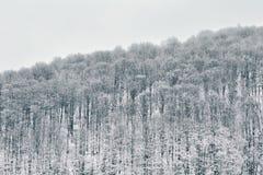forest hill Styczeń 33c krajobrazu Rosji zima ural temperatury zdjęcie royalty free