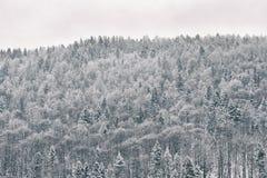 forest hill Styczeń 33c krajobrazu Rosji zima ural temperatury fotografia royalty free