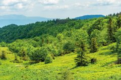 Forest on hill in summer mountain landscape. Beautiful scenery on a sunny day with cloudy sky. wonderful nature background. explore carpathians concept stock photo