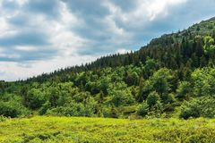 Forest on hill in summer mountain landscape. Beautiful scenery on a sunny day with cloudy sky. wonderful nature background. explore carpathians concept royalty free stock image