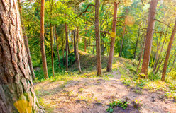 Forest hill and sunset Royalty Free Stock Image