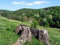 Forest Hills Arkivbild