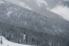 Forest Hills en Colombie-Britannique Images libres de droits