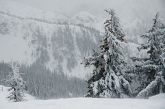 Forest Hills en Columbia Británica imagen de archivo