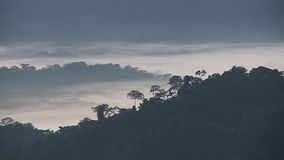 Forest Hills i dimma och mist lager videofilmer