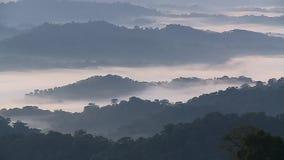 Forest Hills i dimma och mist 2 stock video