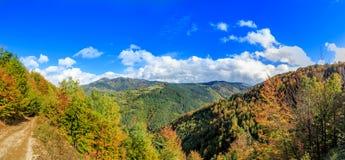 Forest Hills i höst Arkivbilder