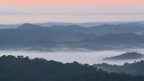 Forest Hills i mist och dimma lager videofilmer