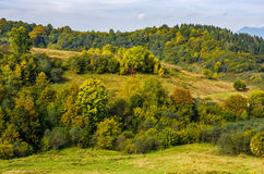 Forest on hills in mountainous countryside. Forest with colorful foliage on hills in mountainous countryside. lovely early autumn mountain landscape royalty free stock photo