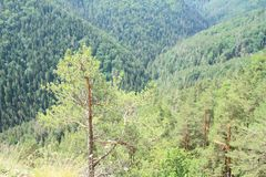 Forest Hills nel paradiso slovacco Fotografia Stock Libera da Diritti