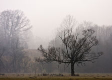 Forest Hills during Winter Stock Photography