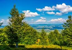 Forest on a hillside of Carpathian Mountain Ridge Stock Image