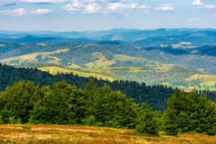 Forest on a hillside of Carpathian Mountain Ridge Royalty Free Stock Images