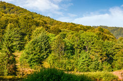 Forest on the hillside in early morning Royalty Free Stock Photo
