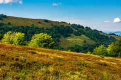 Forest on a hillside in evening light Stock Photo