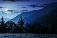 Forest on the hillside in High Tatras at night. Spruce forest on the hillside meadow in High Tatras mountain ridge. Gorgeous scenery mountainous scenery in early Stock Photography