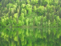 Forest hillside in lake reflection Stock Photo