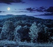 Forest on hillside meadow in mountain at night Stock Photography