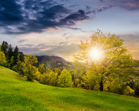 Forest on hillside meadow in mountain at sunset Royalty Free Stock Photos