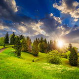 Forest on hillside meadow in mountain at sunset Stock Photography