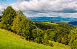 Forest on hillside meadow in mountainous area Stock Images