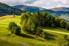 Forest on hillside meadow in mountains Royalty Free Stock Photography