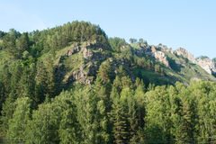 Forest on the hillside. Trekking in the Altai Mountains Royalty Free Stock Photos