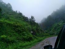 Fog after rain stock image